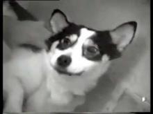 Жидкостное Дыхание Собаки под руководством Андрея Филиппенко